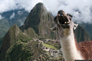 Alpaca Expeditions - Inca Trail