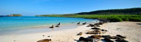 Galapagos Island Travel Tips