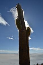 30ft Cactus!