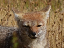 Mr. Fox sat by the road