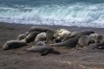Elephant seals Peninsula Valdes