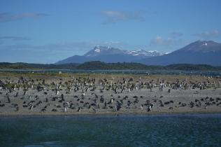 Pinguino Island