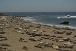 Elephant Seal Rockery, Big Sur